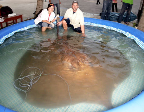 090226-giant-stringray-picture-missions_big.jpg